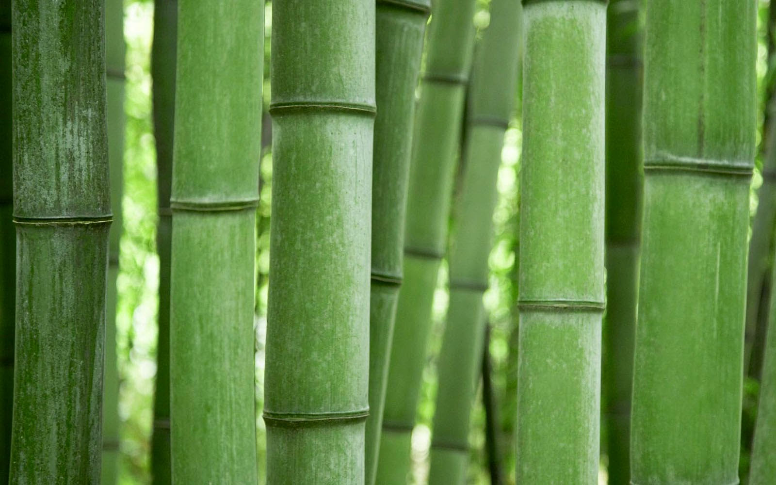 wallpapers: bamboo wallpapers
