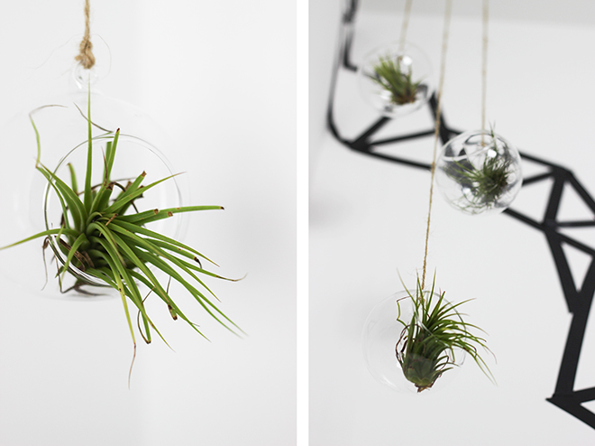 Hanging Glass Baubles - Air Planters by The Goodowl