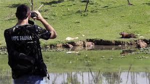 Os animais ficarão no parque ecológico da Pampulha onde passarão por exames