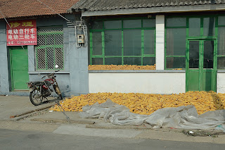 Corn drying in Huairou, Beijing
