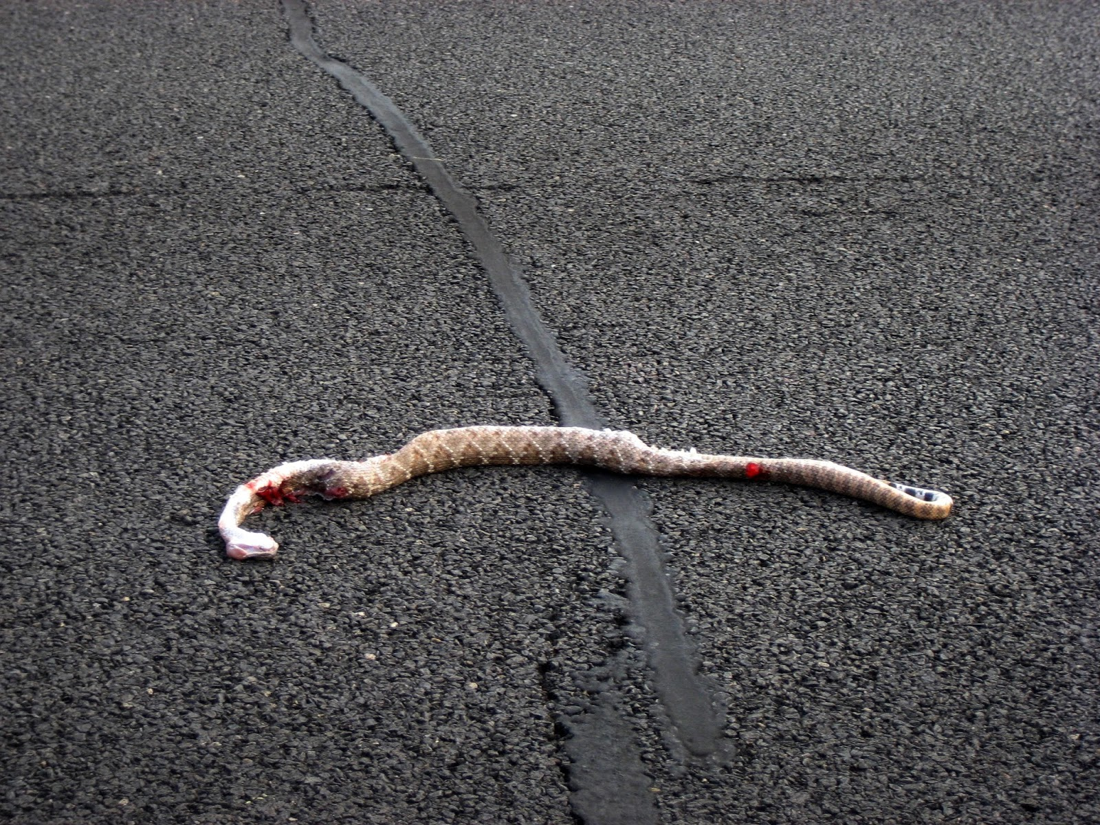 Highway+380+-+dead+snake.JPG