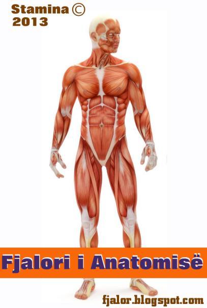 Fjalor anatomik