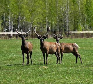 Животный мир восточного казахстана