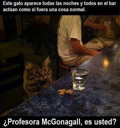 McGonagall humor gato bar