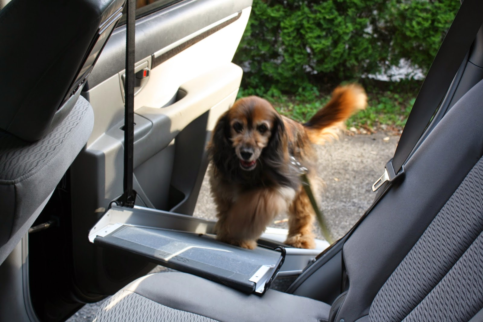 the writer39s dog fun on the go solvit ramp and side door With side door dog ramp