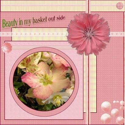 Beauty in my garden
