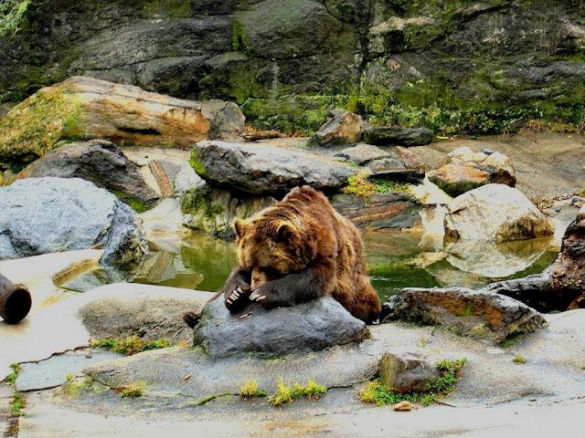 """<img src=""""http://1.bp.blogspot.com/-tTHLcemAi68/Uq25Vmxvs5I/AAAAAAAAFek/lnBGRk0z6Io/s1600/343.jpg"""" alt=""""Bear wallpapers"""" />"""