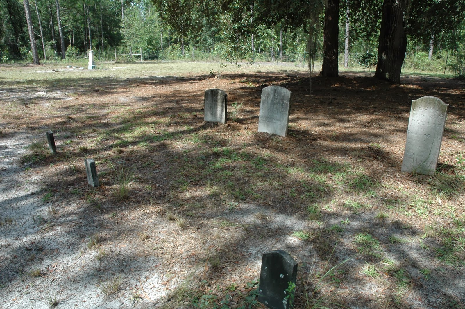 cemetery in the forest - photo #44