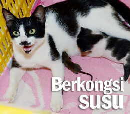 Koleksi Viral Aneh Kucing Susukan Tikus
