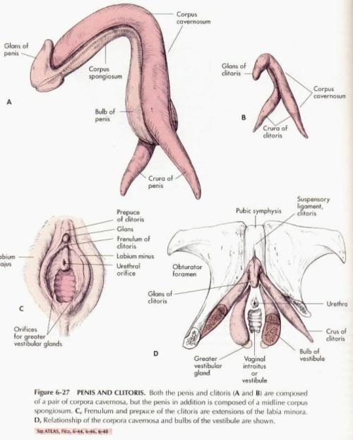 etimologia del renacimiento prostitutas en benetusser