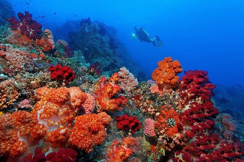 Korallen unvergleichlich