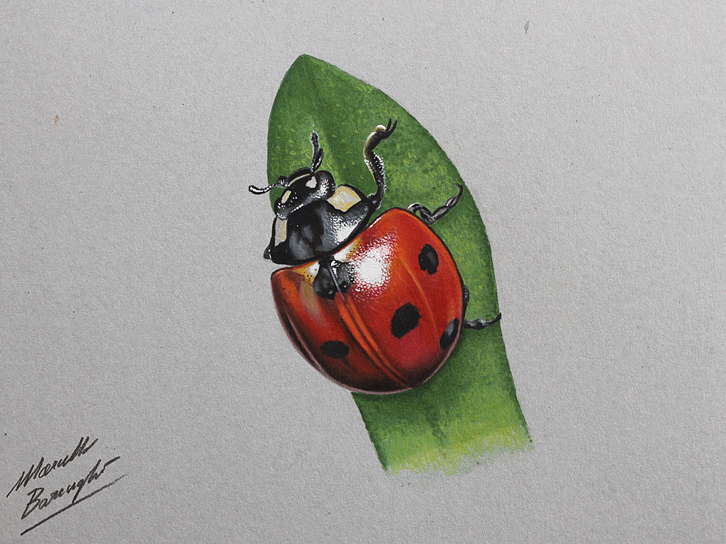 Realistic ladybug drawing - photo#1