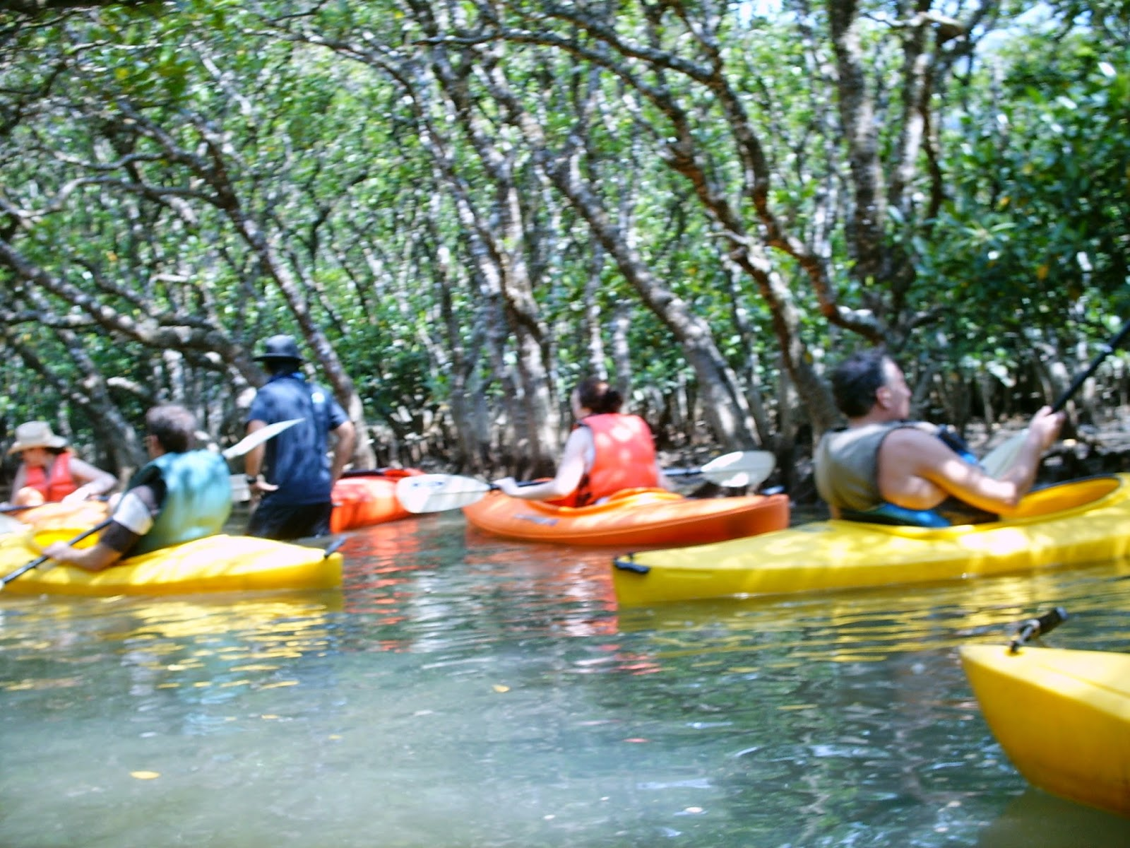 Unique Japan Tours Amami Oshima Tropical Tour Canoeing Mangrove Lake
