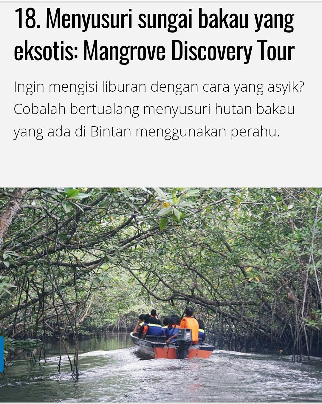 Bintan Mangrove sunflies Tour