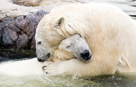BIG BEARS HUGS