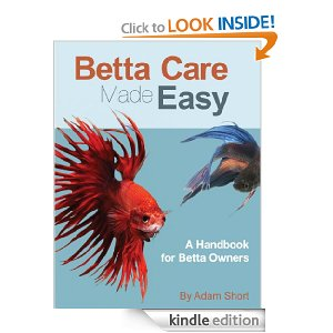 Betta fish care for Betta fish care guide