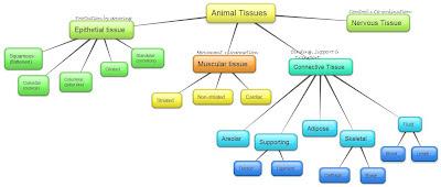 CBSE Class 9 - Biology - CH6 - Tissues (MCQs)