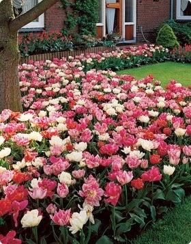Dise o y decoraci n de la casa ideas para decorar su for Como puedo arreglar mi jardin