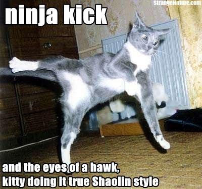 Black Cat Kicking A Dog S Ass