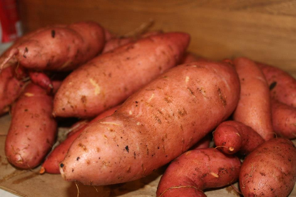 how to grow a sweet potato in a jar