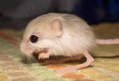 أصغر الحيوانات في العالم 04.jpg