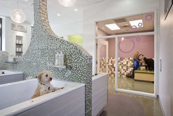 Imagine these retail store interior design dog spa for 5 paws hotel and salon