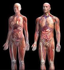 Fakta Unik Organ Dalam Tubuh Kita