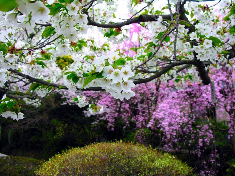 Kesinlikle ilk baharı barındıran 3 ay :) 'ilk'bahar gelir