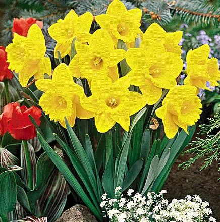Garden Center Ejea Cuales Especies De Plantas Son Resistentes Al - Plantas-de-jardin-resistentes