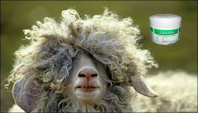 Lanolin face cream from sheep