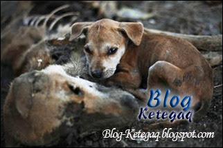 Kisah sedih anak anjing yang enggan meninggalkan ibunya yang telah mati