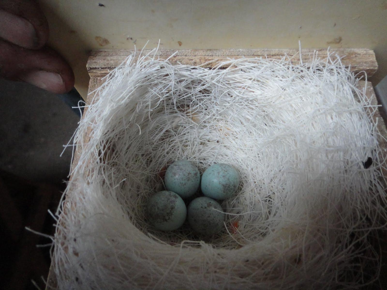 Een stap in de wereld van ei tot kanarie foto 39 s - Kappers huis van de wereld ...
