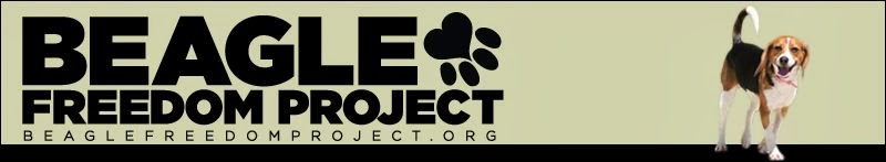 Beagle Freedom Project
