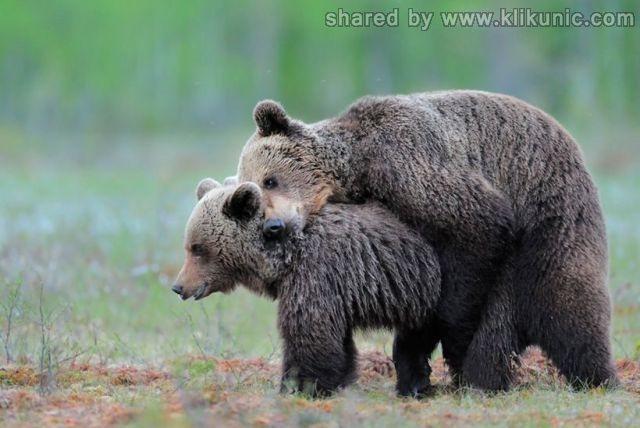 http://1.bp.blogspot.com/-tWpRUKf6mCw/TXWBGf0YPkI/AAAAAAAAQKk/SLA-h9V_xU0/s1600/these_funny_animals_632_640_06.jpg