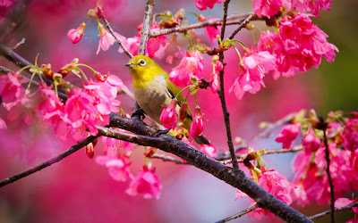 pretty-images-of-a-small-yellow-bird-rose