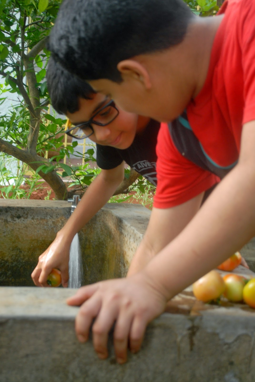 My little green patch: Summer fun with Bhuvan, Rohan and Sheetal...