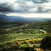 Olive groves, Úbeda, Spain