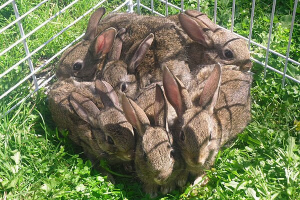 Funny animals of the week - 13 December 2013 (40 pics), cute bunnies