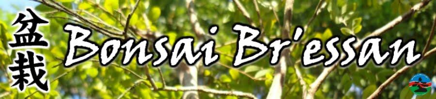 Bonsai Bressan