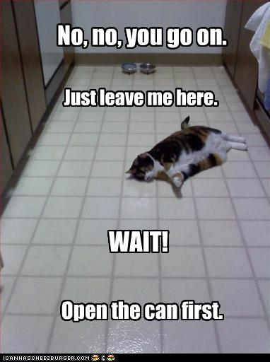 lol cat lazy cat fight