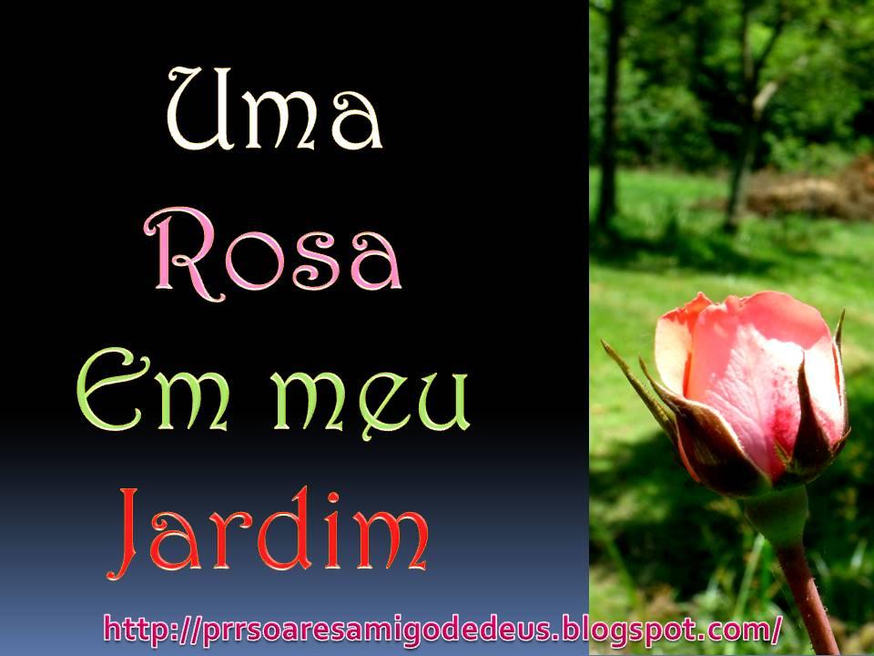 rosas no jardim poema : rosas no jardim poema:prrsoares: Uma Rosa em meu Jardim ( Poesia)