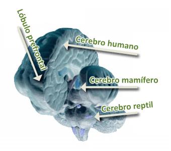cerebros anidados