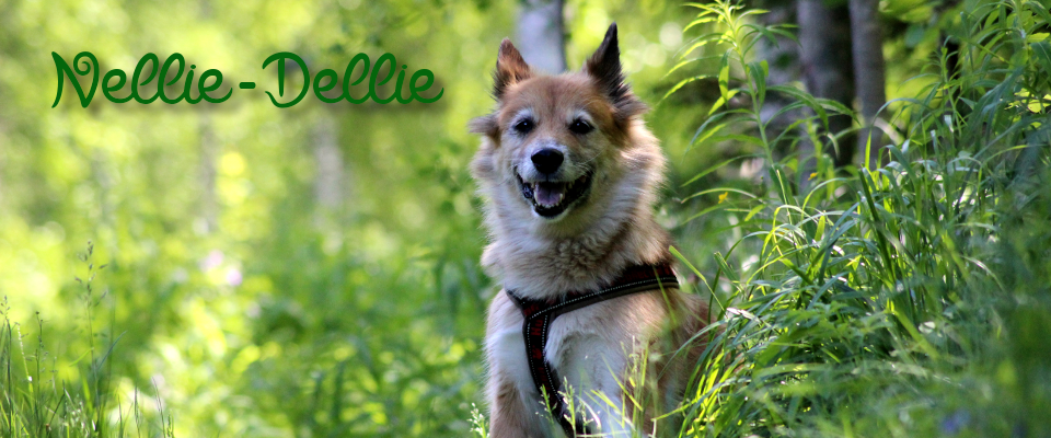 Nellie-Dellie