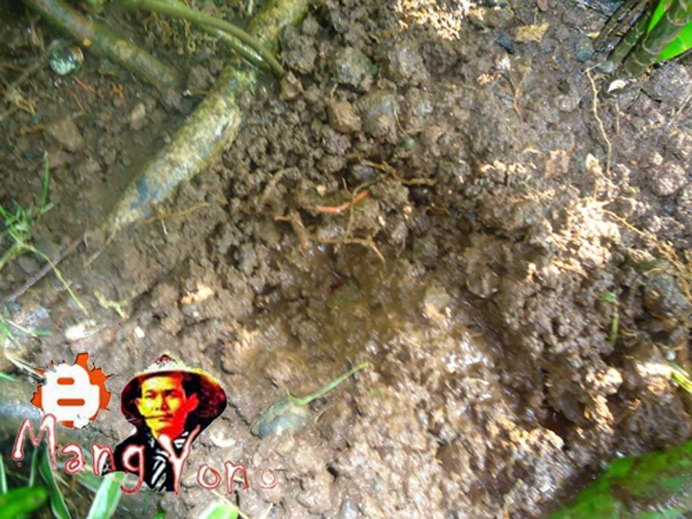 Gambar 2. Menggemburkan tanah dan membuat lubang