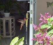 foto 4 - kolibri - blenchi