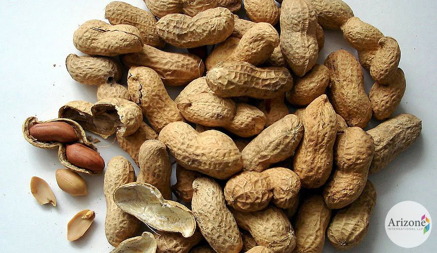 Peanuts, Health Benefits Of Peanut, Peanut Skin Benefits, Benefits Of Peanuts, Usage Of Peanuts, Arizone International LLP Vapi