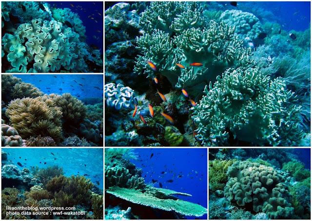Eksotisme Wisata Bawah Laut Pulau Hoga, Wakatobi