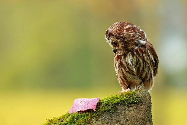 Breathtaking Beauty of Owls Ever Caught 1