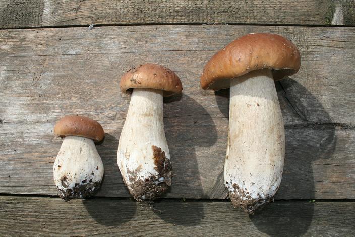 permaforêt: champignons : cueillir, cuisiner et conserver les
