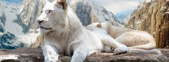 Los 10 animales más peligrosos del mundo Animales y  - imagenes de animales en peligro